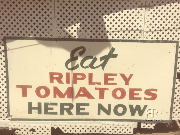 Eat Ripley Tomatoes