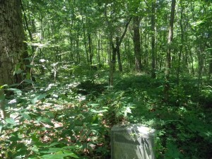 Headstone lost among the woods